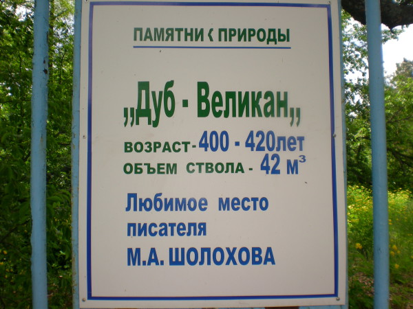 информация про самый старый дуб