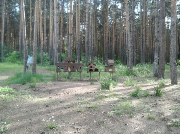 Пермь лес