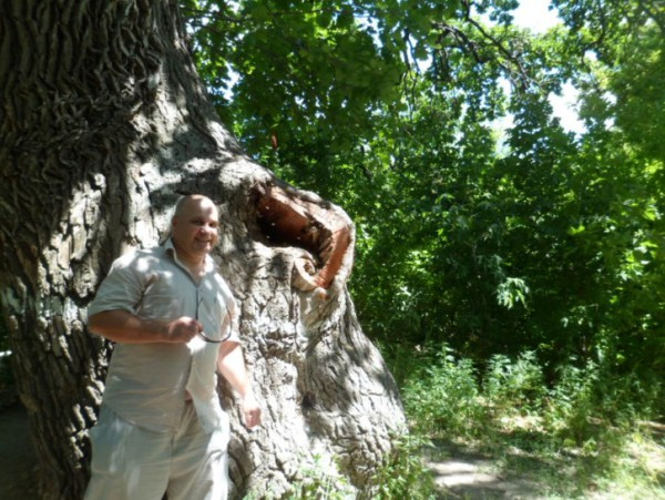 старый дуб волгоградская область