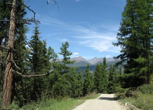 дорога на Кату – Ярык елки