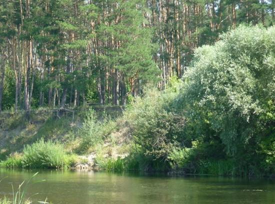 чистая река ворона