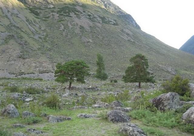 три дерева и гора