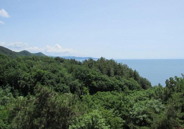 черное море из отеля
