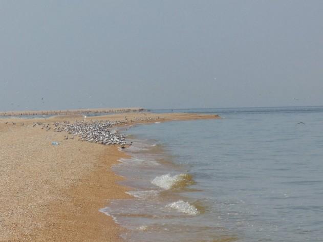 поездка на азовское море птичий остров