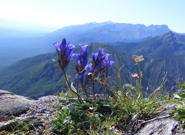 горные цветы на тропе