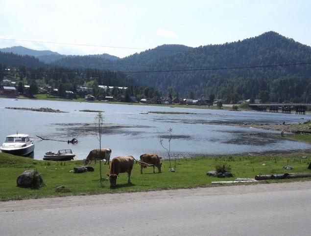поездка на авто на телецкое озеро