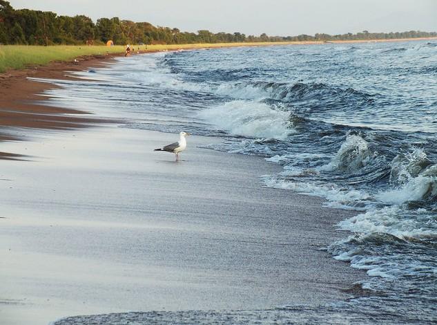 чайка на берегу байкала
