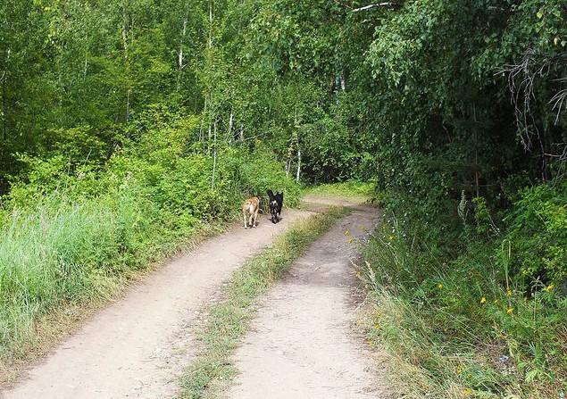 поездка на байкал собачки на тропе