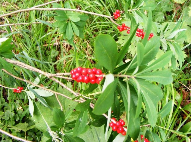 поездка на теплые озера ягоды