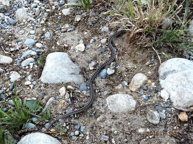 змея на умхее