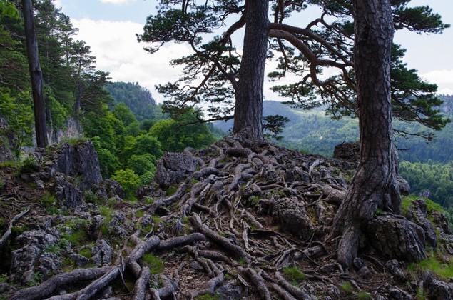 деревья в лаго-наки