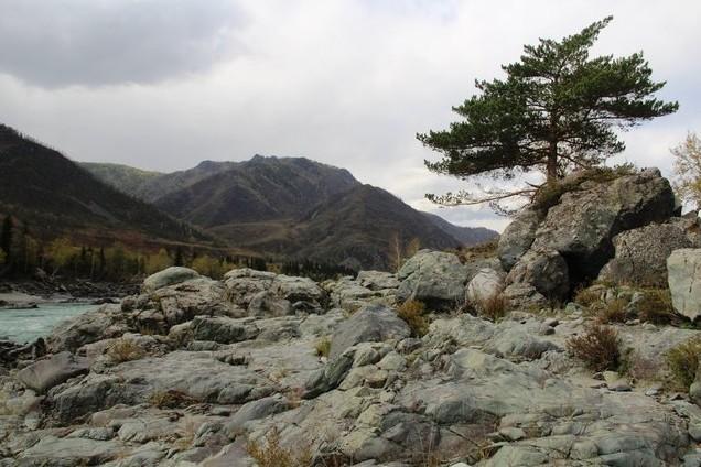 поездка на водопад Бельтертуюк , сосна на скале