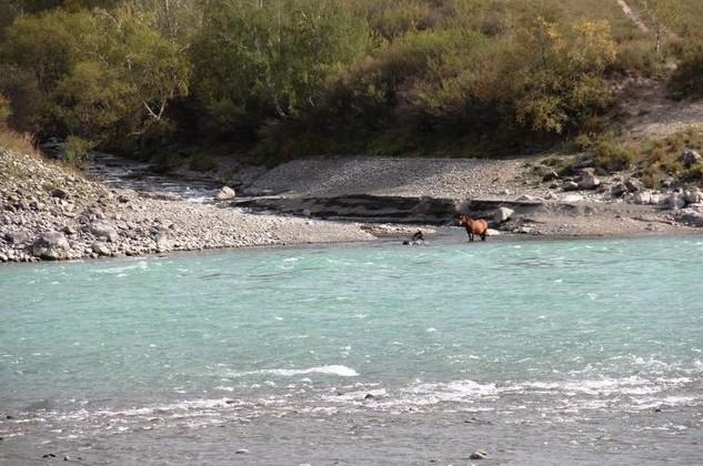 купание жеребенка