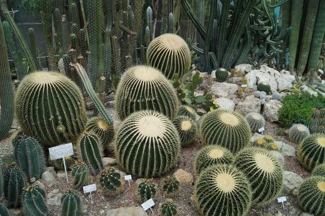 кактусы в крыму