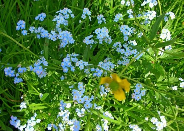 цветы на базе ергаки