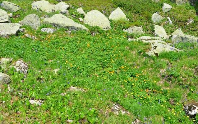 путешествие на скалу парабола по зеленому склону