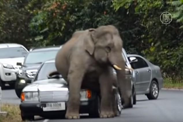 слон уселся на машину