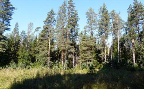 Вид с трассы А127, лес