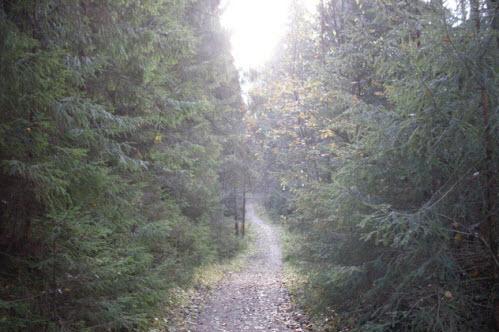 Тропинка в Токсовском лесопарке, достопримечательности трассы Р-33