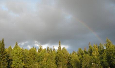 радуга, тучи, лес