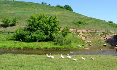 утки, речка, кудыкина гора