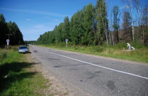 Трасса Р104, Пачеболка, медведи