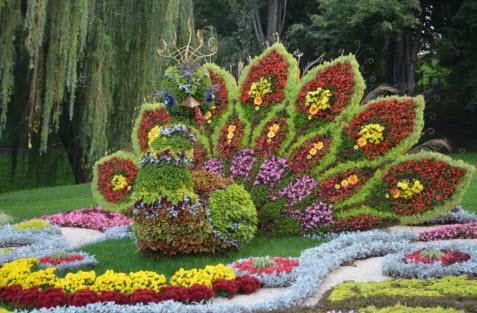 павлин в парке, поездка в Киев