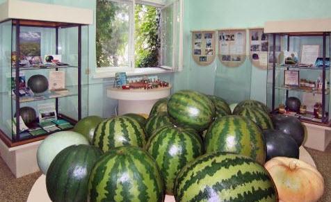 музей арбуза камызяк трасса р214