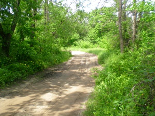 тропа друидов, дорога к старому дубу