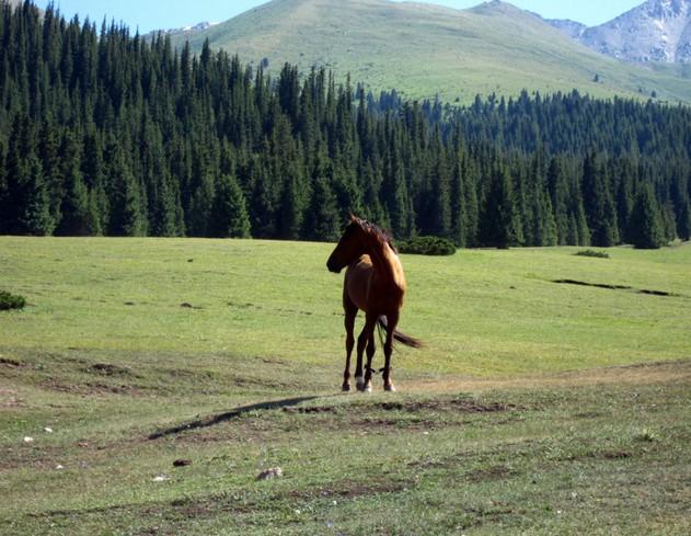 кони в киргизии