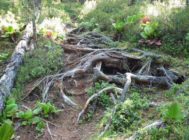 корни и коряги в горах аршан