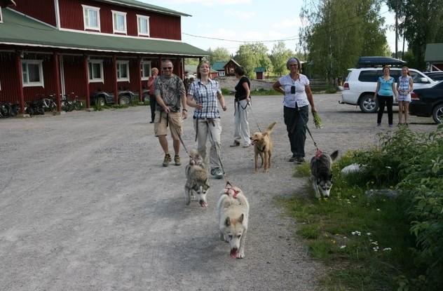 карелия пробежка с собаками