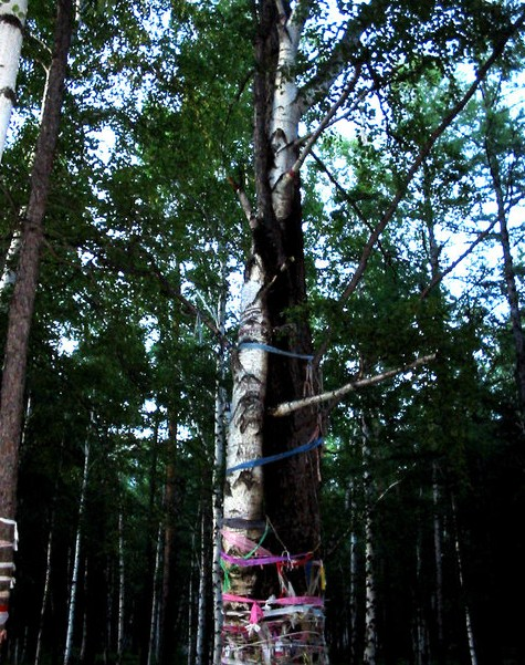дерево любви на аршане