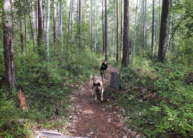 собаки на байкале горная тропа
