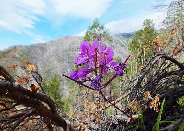поездка на байкал горные цветы