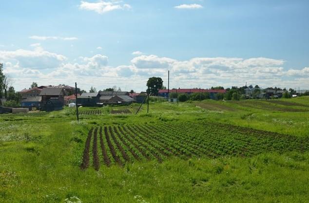 вид на деревню ломоносово