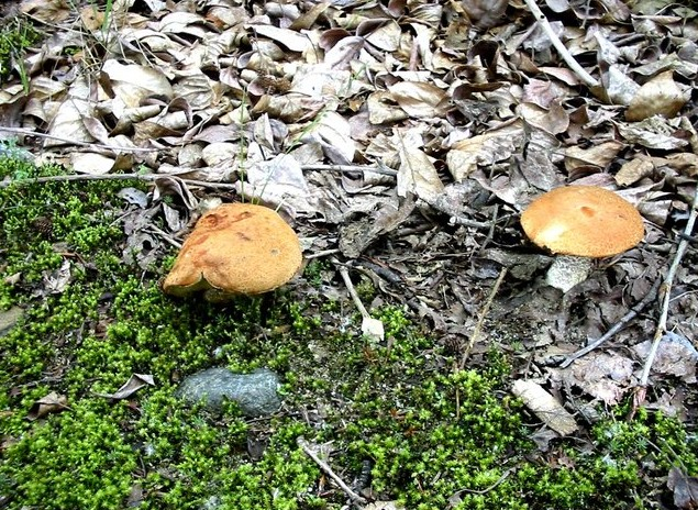 поездка на теплые озера грибы