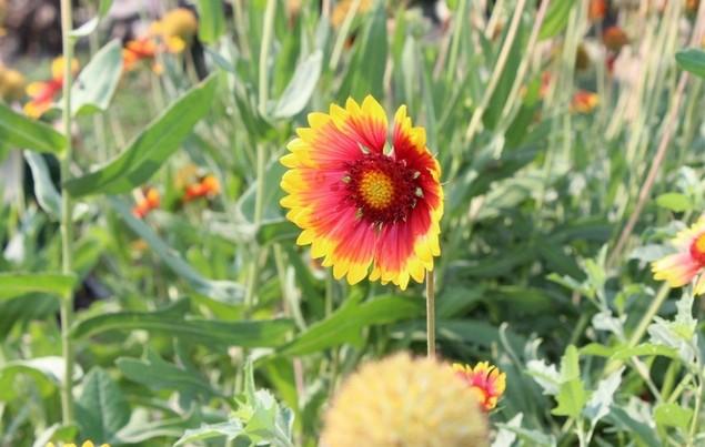 цветок в остеровке