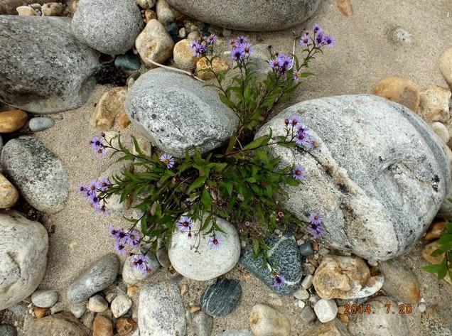 путешествие на умхей цветы