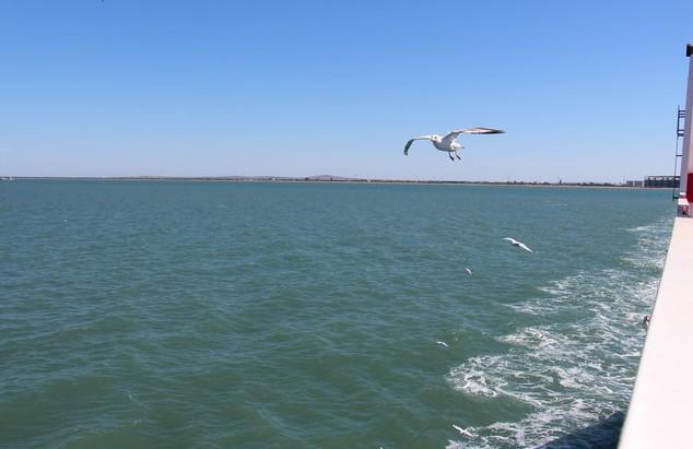 чайка летит за паромом в крым