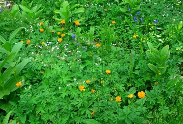 цветы в ергаки