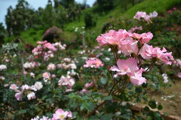 ботанический сад цветы