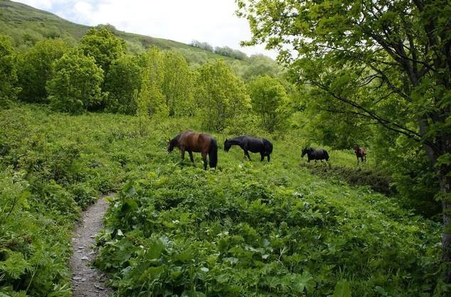 кони на домбае