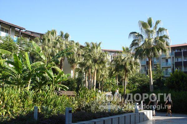 пальмы и дома