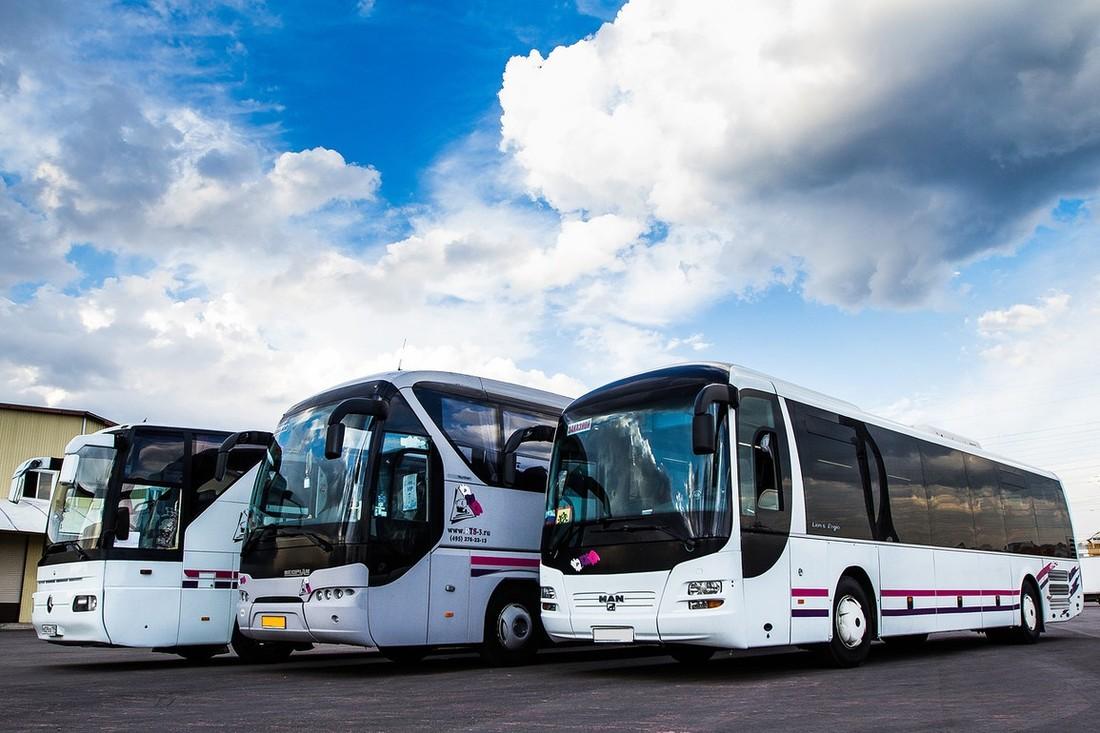 много автобусов картинки