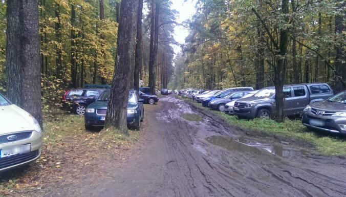 Въезд в лес